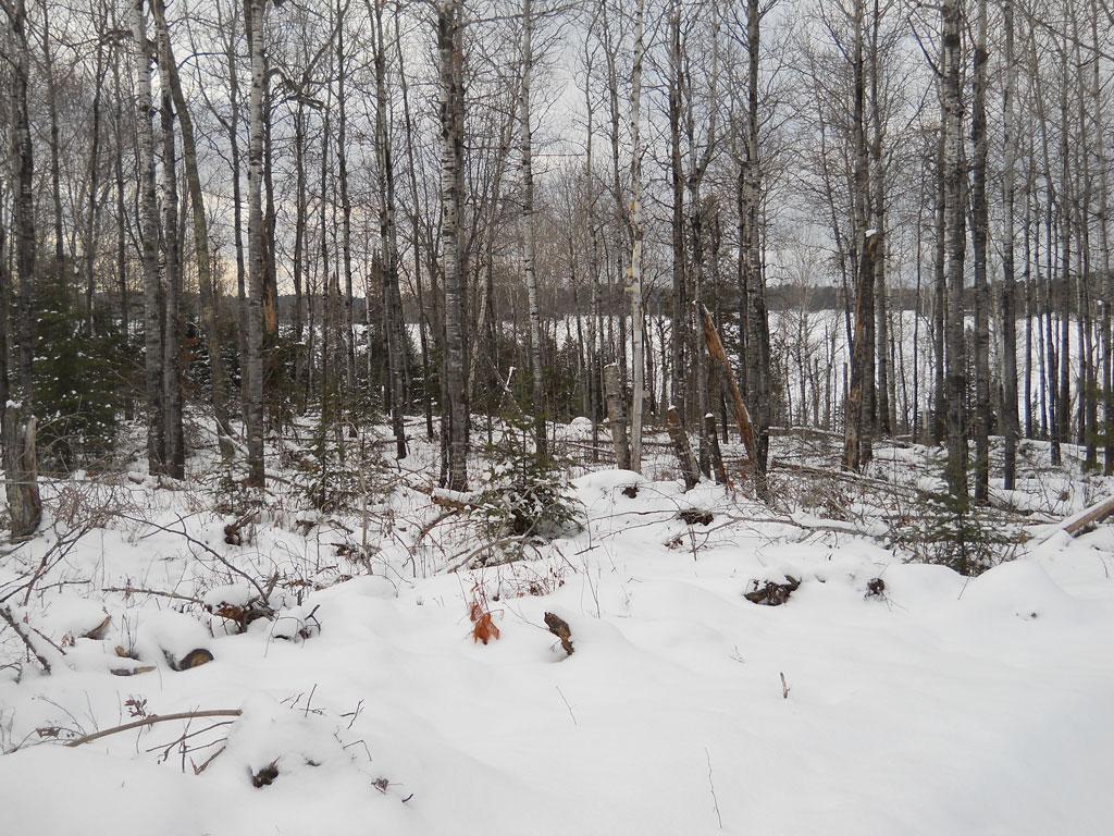Dale-Mulfinger-Reindeer-Cabin-